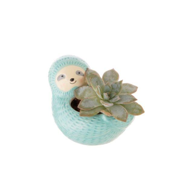 Maceta mini cactus perezoso Sass y Belle Decoplantia