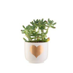 Mini macetas para cactus corazon dorado Sass and Belle Decoplantia