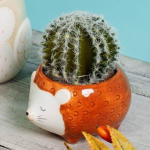 Macetero erizo Hettie cactus Sass & Belle Decoplantia